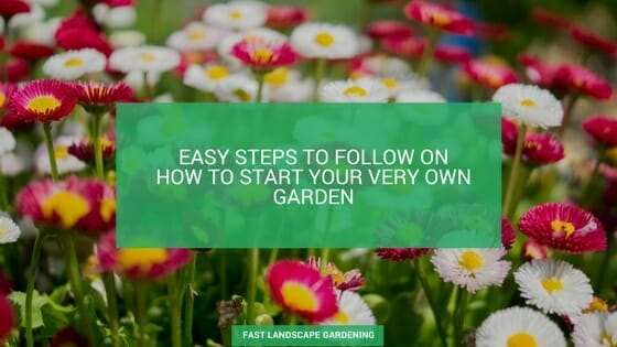 5 easy steps to follow for starting your own garden