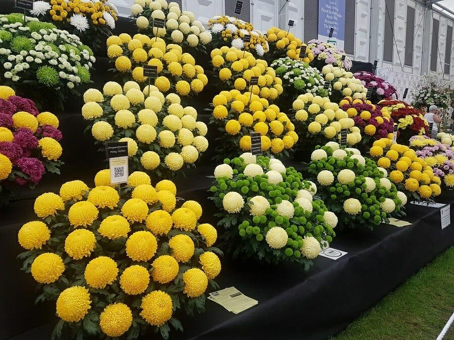 Rhs Chelsea Flower Show 2018 4