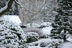 Winter Garden Maintenance Tips