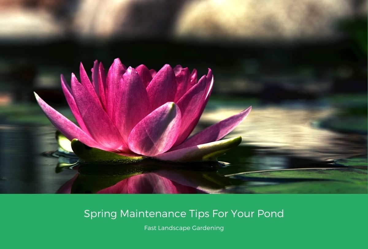 Spring Maintenance Tips For Your Pond