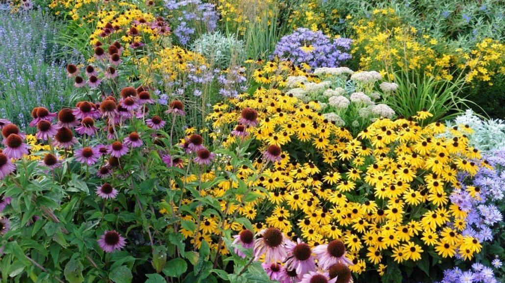 Winter Garden Perennials
