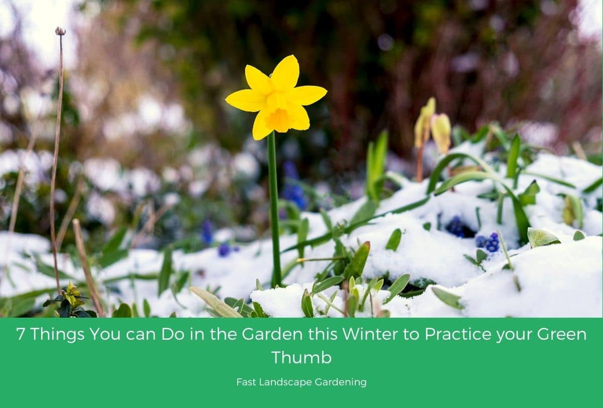 7 Things You Can Do In The Garden This Winter To Practice Your Green Thumb
